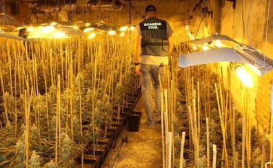 Desmantelan una plantación de marihuana de alto rendimiento en una nave industrial de Mucientes, en Valladolid