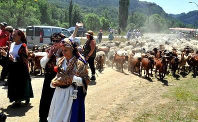 La Fiesta de la Trashumancia de Prioro vuelve a contar con un rebaño de 2.000 ovejas
