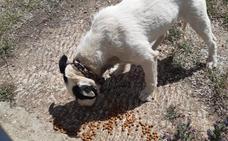 Desaparecen los perros que estaban en malas condiciones en Villaquilambre y los vecinos desconocen su paradero