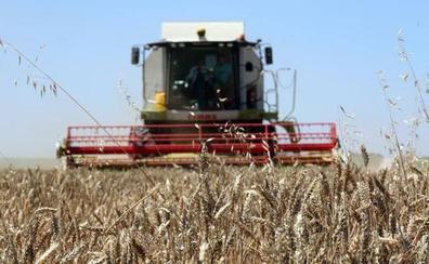 La Junta prevé una cosecha de en torno a 4,5 millones de toneladas de cereal en Castilla y León