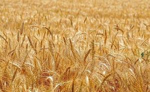 UPA reclama al nuevo gobierno de Castilla y León que cumpla su compromiso de «apoyo firme» al sector agrario y al mundo rural