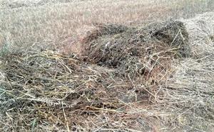 Cajamar ofrece financiación a las comarcas leonesas afectadas por el granizo y las fuertes lluvias