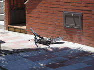 Explota un televisor y desata un incendio en una vivienda de El Ejido