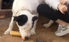 Denuncia el robo de sus perros tras una queja vecinal por presunto abandono animal