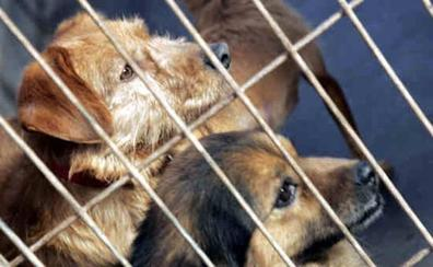 Más de 138.000 perros y gatos fueron abandonados en España en 2018
