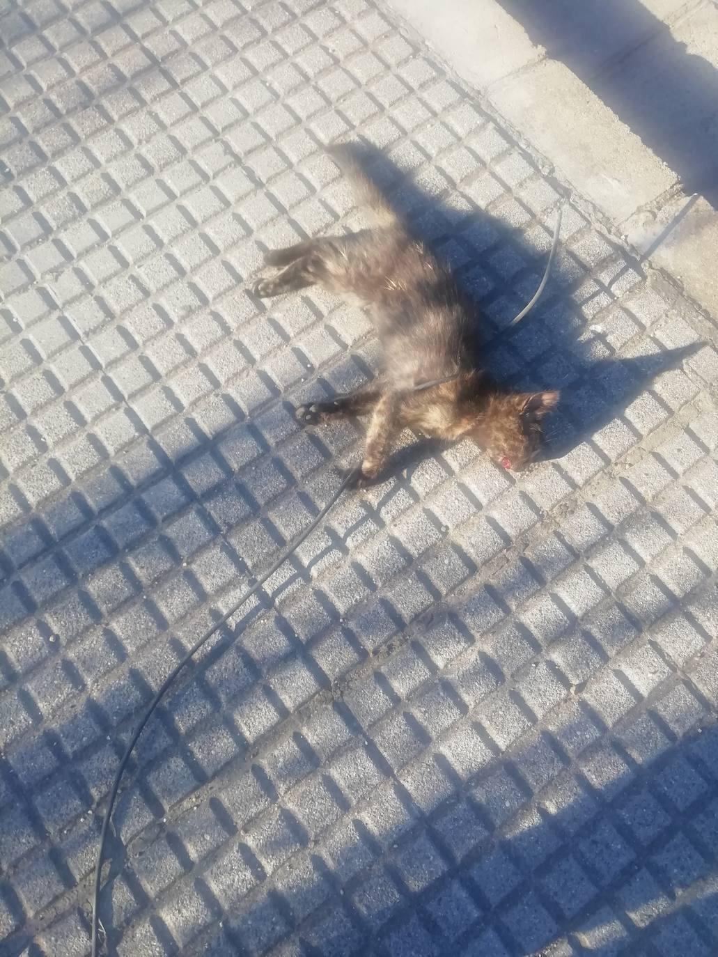 Arrastran a un gato hasta la muerte en la zona del Hispánico