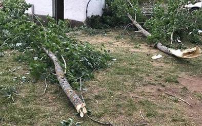 El paso de un huracán provoca una 'lluvia de ramas' en Montuerto
