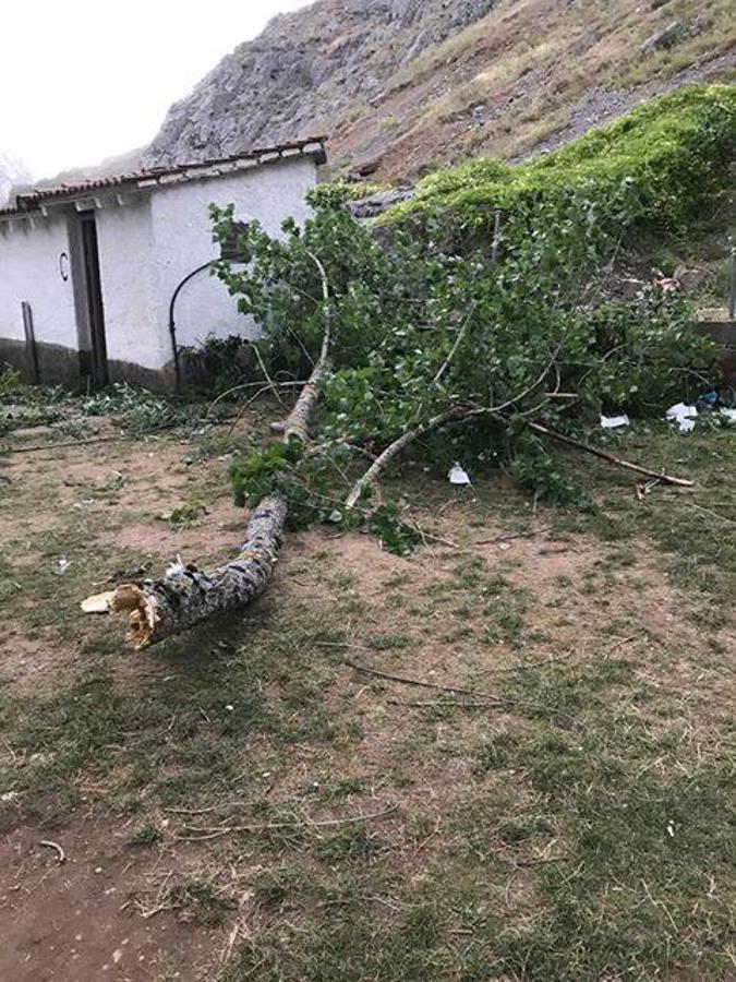 Un fuerte vendaval provoca la caída de numerosas ramas en Montuerto