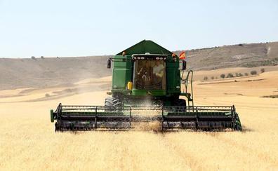 La sequía reduce la cosecha del cereal a 4,8 millones de toneladas, un 17% menos de media de los últimos años