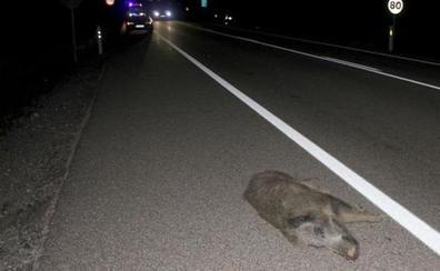 La provincia de León registra 1.726 accidentes de tráfico provocados por animales en el año 2018