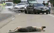 Los accidentes provocados por animales en Castilla y León se duplican en diez años