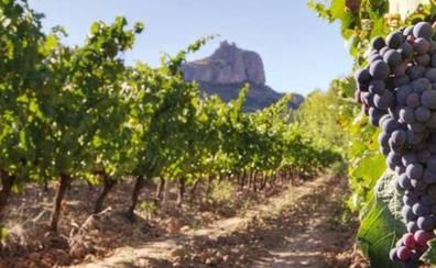 El Gobierno trabaja en el diseño de mecanismos para dar estabilidad y calidad del sector vitivinícola español