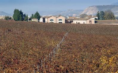 El 22% de los viñedos de Marqués de Vargas reconocidos con la distinción de 'Viñedo Singular'