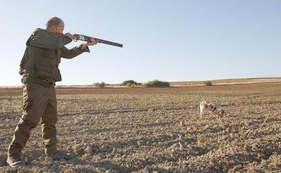 España permite de nuevo la caza de unas 800.000 tórtolas pese a las advertencias de la UE