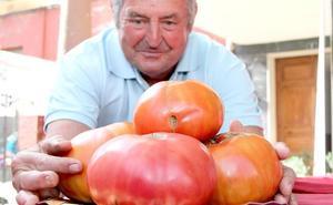Tres décadas de tomate mansillés