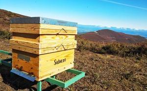 Miel Salvaxe, calidad, etiqueta ecológica y producto artesano