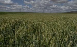 El cultivo del campo genera el 37% de gases de efecto invernadero, según la ONU
