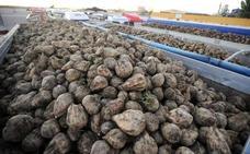 UCCL cifra en un 30% los intereses por la demora en el pago de los 3 euros por tonelada de remolacha de la campaña 2011/2012