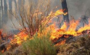 La Guardia Civil detiene a nueve personas por provocar 11 incendios en León y cinco provincias más