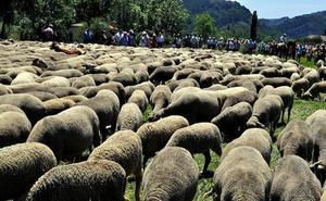 La sequía obliga a reducir el tiempo de permanencia de los rebaños trashumantes en la montaña leonesa