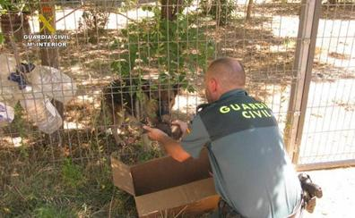 Rescatados seis cachorros de pastor alemán enterrados vivos en Teruel
