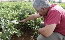Los agricultores temen que la plaga de topillos condicione la sementera