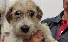 La Protectora acoge a 13 perros «de golpe» encontrados en las obras del nuevo León-Este