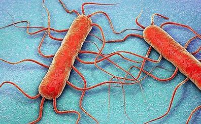 Sanidad confirma más de 200 casos de infección por listeriosis en toda España