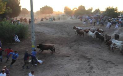 Muere un vecino de Cuéllar de unos 60 años corneado por un toro en el último encierro