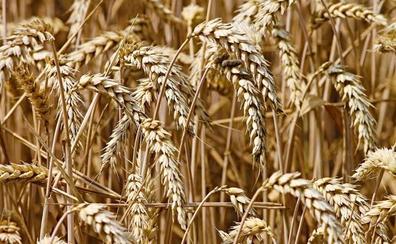 UCCL denuncia el hundimiento de los precios en los cereales