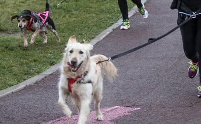 Zamora cobrará un impuesto de nueve euros por tener perro