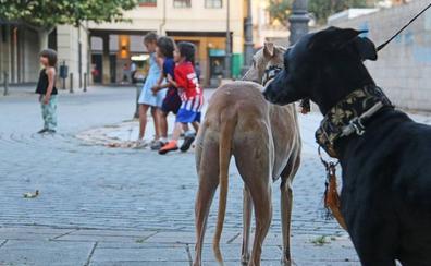 Un niño, casi tres perros
