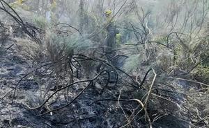 Las brigadas actúan en seis incendios de la provincia y extinguen el fuego de Torre del Bierzo