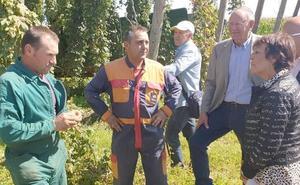 Los agricultores invertirán 10 millones para duplicar las hectáreas de producción de lúpulo en León