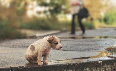 Ciudadanos San Andrés reclama al equipo de gobierno la firma urgente del convenio para la captura y recogida de animales abandonados