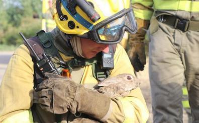 Un nuevo incendio en Santa Olaja de la Ribera moviliza a diferentes medios para su extinción