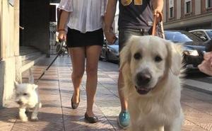 Ana Franco niega que el anterior equipo de Gobierno prohibiera el acceso de perros a la Plaza de la Inmaculada