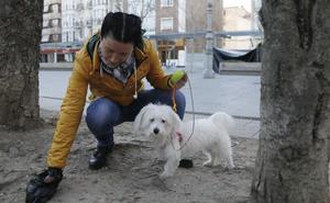 El impuesto al perro, una tasa con escasa aplicación en Castilla y León