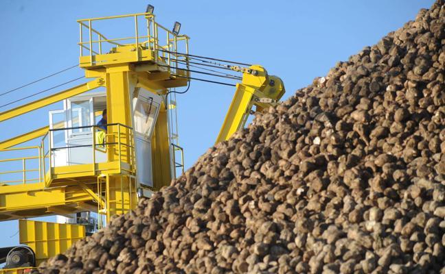 Acor inicia su campaña mañana con la previsión de superar 1,5 millones de toneladas de remolacha