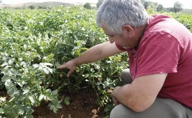 Un informe de Unicaja señala que el agricultor leonés percibió, de media, 16.964 euros el año pasado