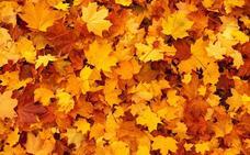 Ya es otoño, en otoño