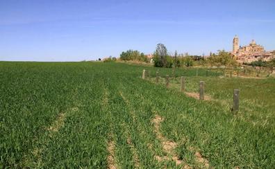 Los agricultores de Castilla y León percibirán desde este miércoles 517,3 millones de las ayudas directas de la PAC