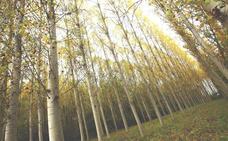 La Uned de Ponferrada analiza la vida secreta de los árboles con la creación de una 'Wood Wide Web'