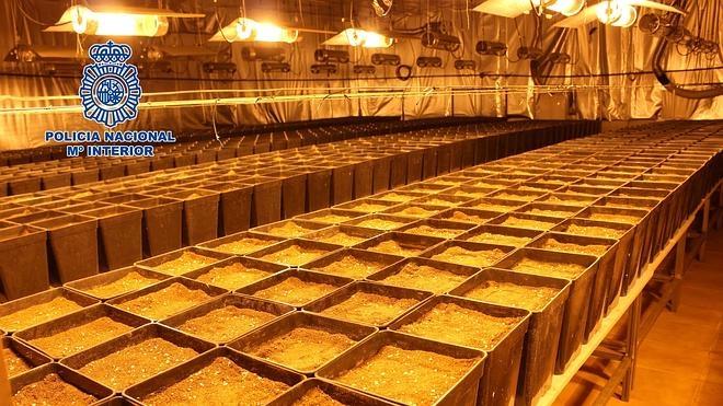 Desmantelan dos naves industriales de Valencia con plantaciones de marihuana