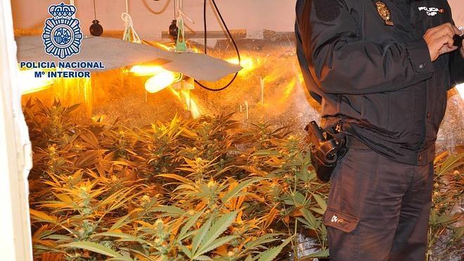 Cae una red dedicada al tráfico de marihuana a gran escala en Almería
