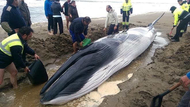 Aparece una ballena muerta en Doñana, la segunda en menos de una semana