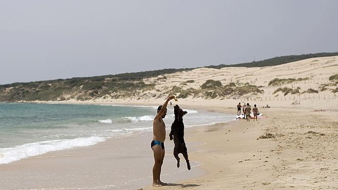 Referéndum para llevar el perro a la playa