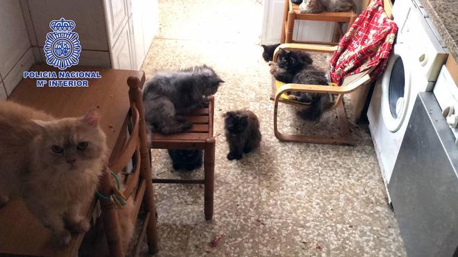 La Policía rescata a 39 gatos y 13 perros abandonados en una vivienda