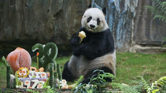 Muere Jia Jia, el oso panda más longevo del mundo