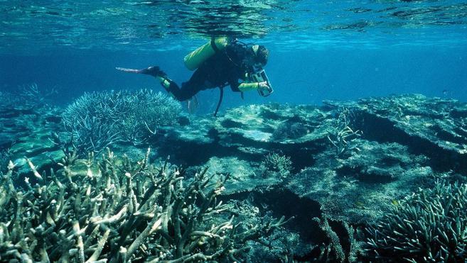 Más del 70% del mayor arrecife de coral de Japón murió en 2016